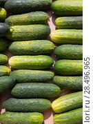 Купить «Cucumbers in a row at the market place outdoor in Mediterranean», фото № 28496965, снято 21 сентября 2013 г. (c) Ingram Publishing / Фотобанк Лори