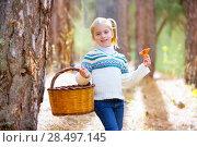 Купить «Kid girl searching chanterelles mushrooms with basket in autumn forest», фото № 28497145, снято 12 октября 2013 г. (c) Ingram Publishing / Фотобанк Лори