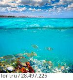 Купить «Denia Alicante Marineta Casiana beach underwater with salema fish school», фото № 28497225, снято 22 августа 2013 г. (c) Ingram Publishing / Фотобанк Лори