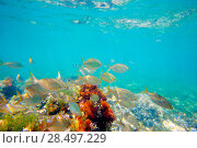 Купить «Mediterranean underwater with salema fish school in spain», фото № 28497229, снято 22 августа 2013 г. (c) Ingram Publishing / Фотобанк Лори