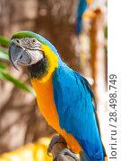 Купить «Blue Parrot portrait with yellow neck in the park», фото № 28498749, снято 7 октября 2007 г. (c) Ingram Publishing / Фотобанк Лори