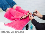 Купить «Pedicure chair spa and woman hands painting toes nail polish after bath with pink towel», фото № 28499353, снято 18 ноября 2013 г. (c) Ingram Publishing / Фотобанк Лори