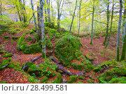 Купить «Autumn Selva de Irati fall beech jungle in Navarra Pyrenees of Spain», фото № 28499581, снято 3 ноября 2013 г. (c) Ingram Publishing / Фотобанк Лори