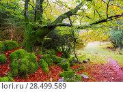 Купить «Autumn Selva de Irati fall beech jungle in Navarra Pyrenees of Spain», фото № 28499589, снято 3 ноября 2013 г. (c) Ingram Publishing / Фотобанк Лори