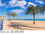 Купить «Alicante Postiguet beach at Mediterranean sea in Spain palm trees», фото № 28499881, снято 21 января 2014 г. (c) Ingram Publishing / Фотобанк Лори