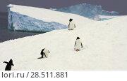 Купить «Gentoo Penguins on the beach», видеоролик № 28511881, снято 16 января 2018 г. (c) Vladimir / Фотобанк Лори