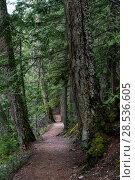 Купить «Dirt road passing through forest, Pemberton, Whistler, British Columbia, Canada», фото № 28536605, снято 22 марта 2016 г. (c) Ingram Publishing / Фотобанк Лори