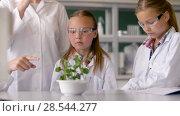 Купить «students and teacher with plant at biology class», видеоролик № 28544277, снято 28 мая 2018 г. (c) Syda Productions / Фотобанк Лори