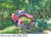 Купить «Цветочная композиция из тюльпанов и клумба в капоте старого автомобиля. Королевский парк цветов Кёкенхоф (Keukenhof). Лиссе. Нидерланды», фото № 28546553, снято 4 мая 2018 г. (c) Сергей Афанасьев / Фотобанк Лори