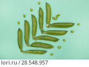 Купить «Стручки зелёного горошка на зелёном фоне», фото № 28548957, снято 4 июня 2018 г. (c) V.Ivantsov / Фотобанк Лори
