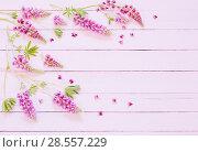 Купить «lupine on pink wooden background», фото № 28557229, снято 30 мая 2018 г. (c) Майя Крученкова / Фотобанк Лори