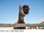 Купить «Лошадь в загоне на морозе», фото № 28582433, снято 3 января 2016 г. (c) Яковлев Сергей / Фотобанк Лори