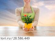 Купить «gardener hands holding flower pot with rose», фото № 28586449, снято 3 марта 2015 г. (c) Syda Productions / Фотобанк Лори