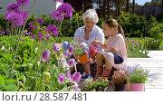 Купить «grandmother and girl planting flowers at garden», видеоролик № 28587481, снято 11 июня 2018 г. (c) Syda Productions / Фотобанк Лори