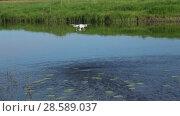 Купить «Квадрокоптер в полете зависает над водой», видеоролик № 28589037, снято 11 июня 2018 г. (c) Виктор Карасев / Фотобанк Лори