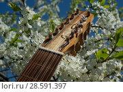 Купить «Vihuela de mano of the 16th century», фото № 28591397, снято 13 мая 2018 г. (c) Дмитрий Черевко / Фотобанк Лори