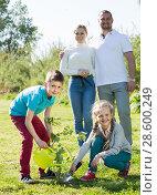Купить «Parents with two kids planting a bush», фото № 28600249, снято 7 июля 2020 г. (c) Яков Филимонов / Фотобанк Лори