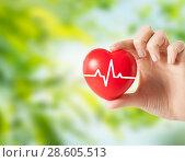 Купить «close up of hand holding red heart with cardiogram», фото № 28605513, снято 28 марта 2013 г. (c) Syda Productions / Фотобанк Лори