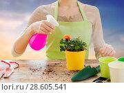 Купить «close up of woman hands spraying roses», фото № 28605541, снято 3 марта 2015 г. (c) Syda Productions / Фотобанк Лори