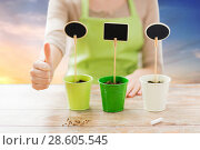 Купить «close up of gardener with pots showing thumbs up», фото № 28605545, снято 3 марта 2015 г. (c) Syda Productions / Фотобанк Лори