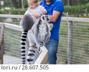 Father and daughter playing with lemurs at the zoo (2016 год). Редакционное фото, фотограф Ирина Аринина / Фотобанк Лори