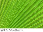Купить «Лист экзотического дерева», фото № 28607513, снято 20 октября 2012 г. (c) Арестов Андрей Павлович / Фотобанк Лори