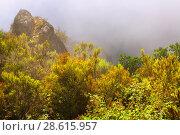 Купить «Misty landscape in summer», фото № 28615957, снято 18 октября 2018 г. (c) Яков Филимонов / Фотобанк Лори