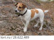 Portrait of a beautiful dog. Стоковое фото, фотограф Argument / Фотобанк Лори