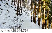 Купить «winter forest in japan», видеоролик № 28644789, снято 18 июня 2018 г. (c) Syda Productions / Фотобанк Лори