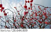 Купить «close up of beautiful sakura tree blossoms at park», видеоролик № 28644809, снято 18 июня 2018 г. (c) Syda Productions / Фотобанк Лори