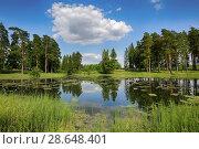 Купить «Красивый летний пейзаж. Хвойные деревья на берегу озера с отражением в воде», фото № 28648401, снято 26 июня 2018 г. (c) Яна Королёва / Фотобанк Лори