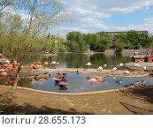Купить «Стая розовых фламинго в Московском зоопарке», эксклюзивное фото № 28655173, снято 7 мая 2016 г. (c) lana1501 / Фотобанк Лори