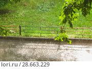 Купить «Пузыри на луже во время грибного (слепого) дождя при солнечном свете», фото № 28663229, снято 23 июня 2018 г. (c) Алёшина Оксана / Фотобанк Лори