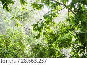 Купить «Проливной дождь при свете солнца», фото № 28663237, снято 23 июня 2018 г. (c) Алёшина Оксана / Фотобанк Лори