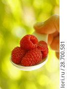 Купить «Raspberries.», фото № 28700581, снято 19 июня 2018 г. (c) easy Fotostock / Фотобанк Лори