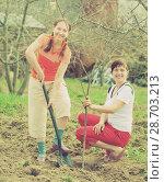 Купить «Female gardeners planting tree», фото № 28703213, снято 8 мая 2011 г. (c) Яков Филимонов / Фотобанк Лори