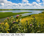 Купить «Thistle thorns on background of pond», фото № 28704761, снято 5 июля 2018 г. (c) Володина Ольга / Фотобанк Лори