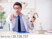 Купить «Funny crazy professor studying animal skeletons», фото № 28728737, снято 7 марта 2018 г. (c) Elnur / Фотобанк Лори