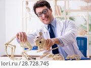 Купить «Funny crazy professor studying animal skeletons», фото № 28728745, снято 7 марта 2018 г. (c) Elnur / Фотобанк Лори