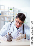 Купить «Vet doctor checking up rabbit in his clinic», фото № 28730129, снято 4 апреля 2018 г. (c) Elnur / Фотобанк Лори