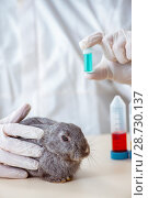 Купить «Vet doctor checking up rabbit in his clinic», фото № 28730137, снято 4 апреля 2018 г. (c) Elnur / Фотобанк Лори