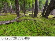 Купить «Forest views», фото № 28738489, снято 1 февраля 2017 г. (c) Яков Филимонов / Фотобанк Лори