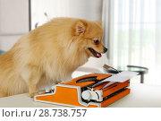 Купить «Funny Pomeranian dog typing on a vintage typewriter», фото № 28738757, снято 26 июня 2018 г. (c) Алексей Кузнецов / Фотобанк Лори