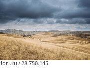 Купить «Gareja Desert, Kakheti Region, Georgia. Autumn Landscape Near Sagarejo Municipality, Kakheti Region.», фото № 28750145, снято 23 октября 2016 г. (c) easy Fotostock / Фотобанк Лори