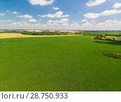 Купить «Top view of agricultural fields in Russia in July», фото № 28750933, снято 10 июля 2018 г. (c) Володина Ольга / Фотобанк Лори
