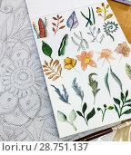 Купить «Watercolor flowers and plants», фото № 28751137, снято 11 июля 2018 г. (c) Любовь Назарова / Фотобанк Лори
