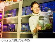 Купить «Girl looking at young fishes in aquarium», фото № 28752405, снято 17 февраля 2017 г. (c) Яков Филимонов / Фотобанк Лори