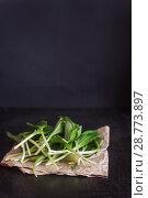Купить «Fresh ramson wild garlic, green sprouts in a bag of burlap on a dark wooden background, selective focus», фото № 28773897, снято 17 апреля 2018 г. (c) Tetiana Chugunova / Фотобанк Лори