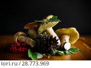 Купить «white forest mushroom», фото № 28773969, снято 17 июля 2018 г. (c) Peredniankina / Фотобанк Лори