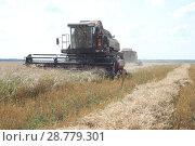 Уборка урожая. Стоковое фото, фотограф Дарья Плеханова / Фотобанк Лори